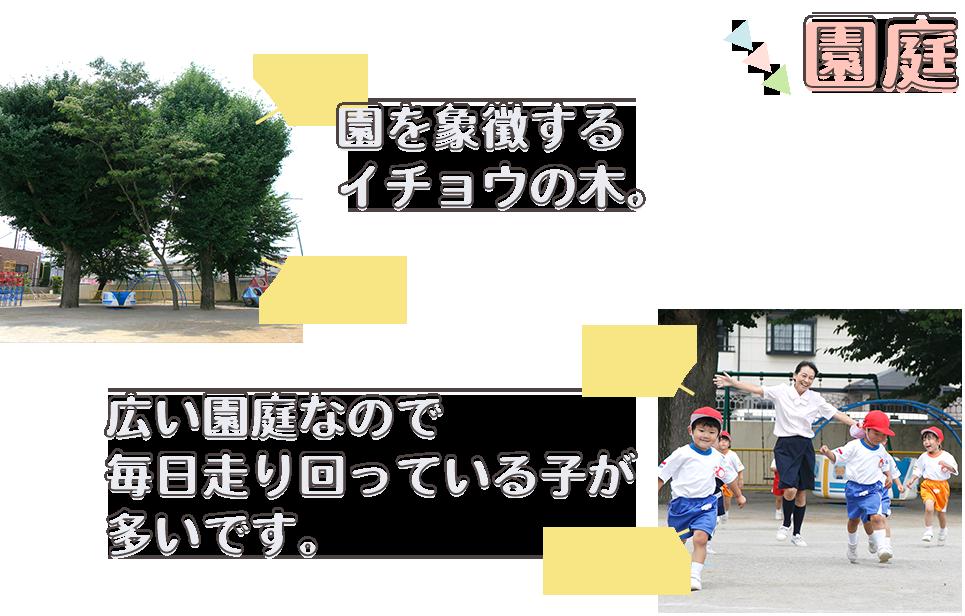 園を象徴するイチョウの木。広い園庭なので毎日走り回っている子が多いです。